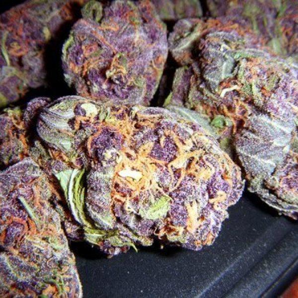 Grand-Daddy-Purple.jpg