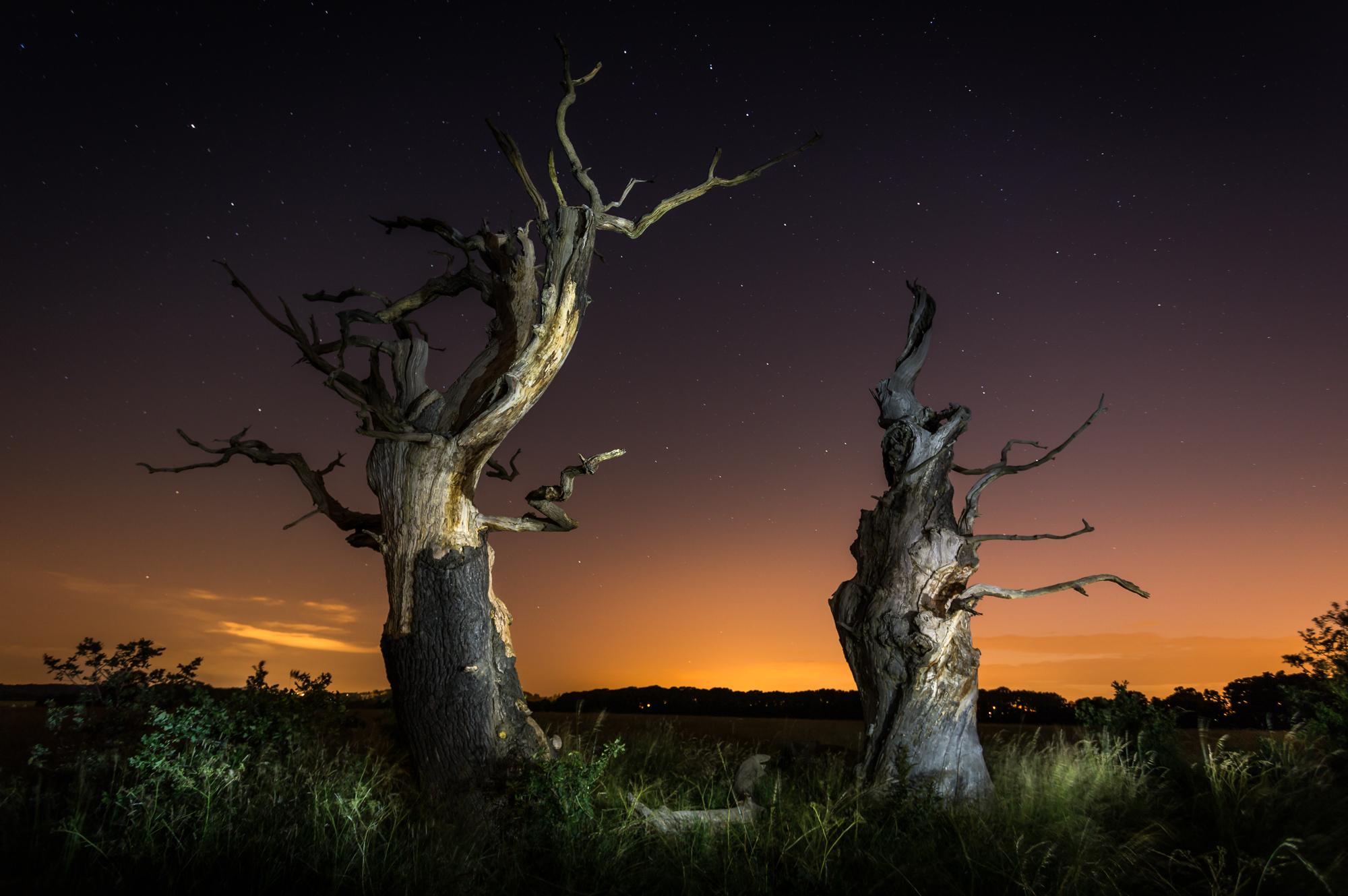 Trees Night-240-Edit.jpg