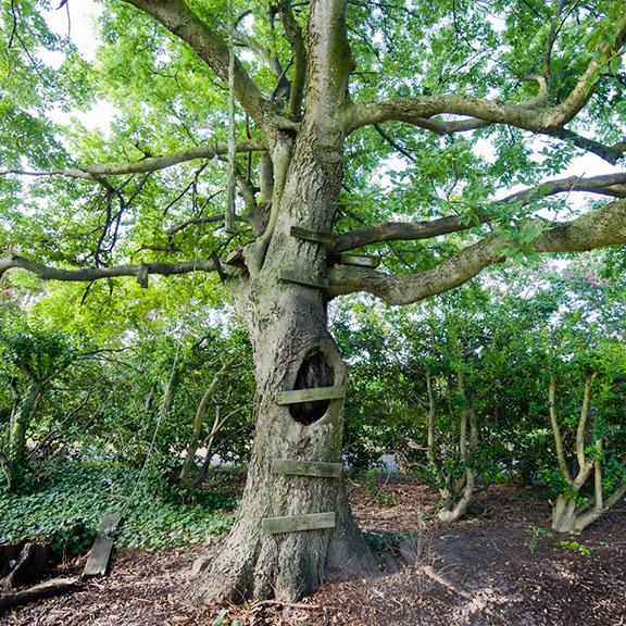 DannAl-Hide-Tree_1SS .JPG