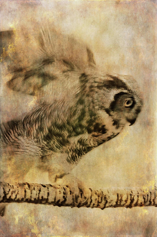 wendi-schneider-chimerical-owl-gilded-kozo-1500.jpg
