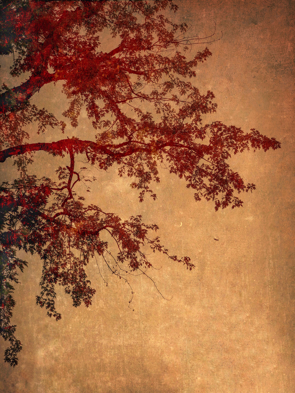 wendi-schneider-crescent-and-crow-gilded-kozo-1500.jpg