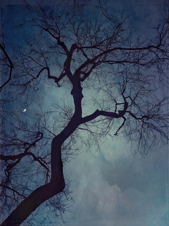 wendi-schneider-crescent-moon-gilded-vellum-1500.jpg