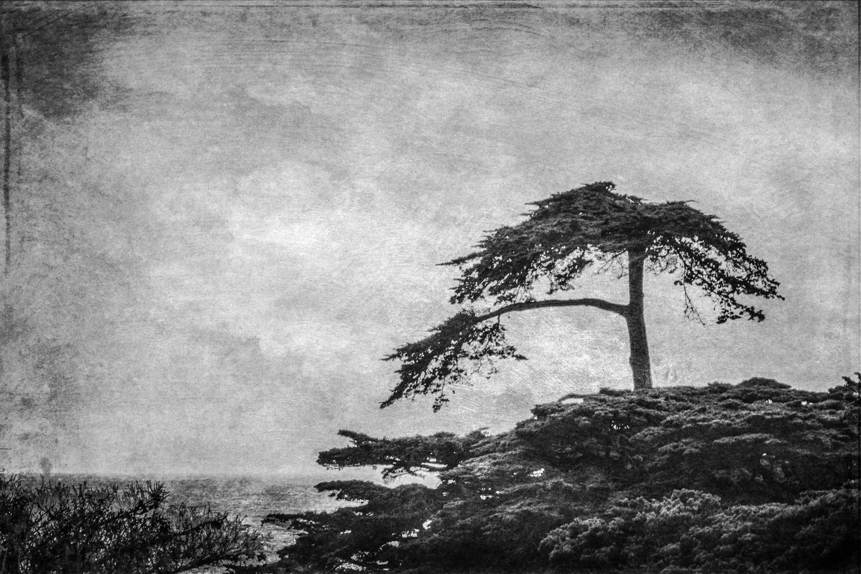 wendi-schneider-cypress-gilded-vellum-1500.jpg