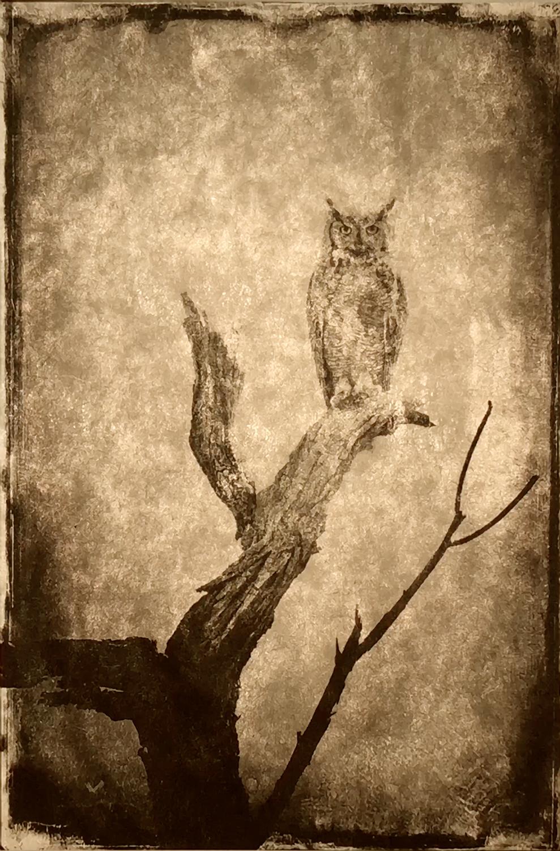 wendi-schneider-full-moon-owl-gilded-kozo-1500.jpg