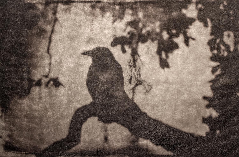 wendi-schneider-thoughts-of-silence-gilded-kozo-1500.jpg