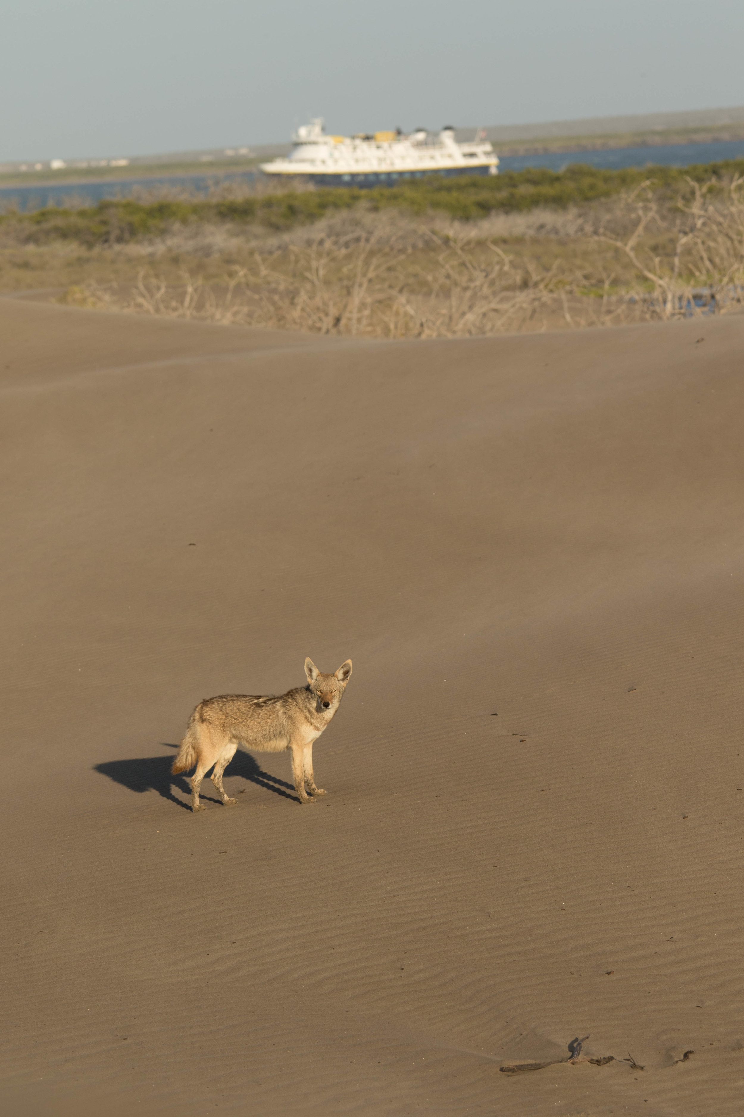 Coyote and Nat Geo Sea Bird