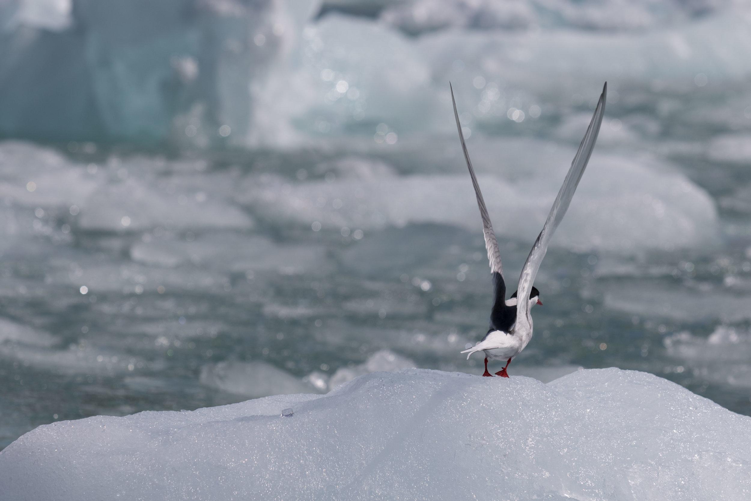 Tern launch