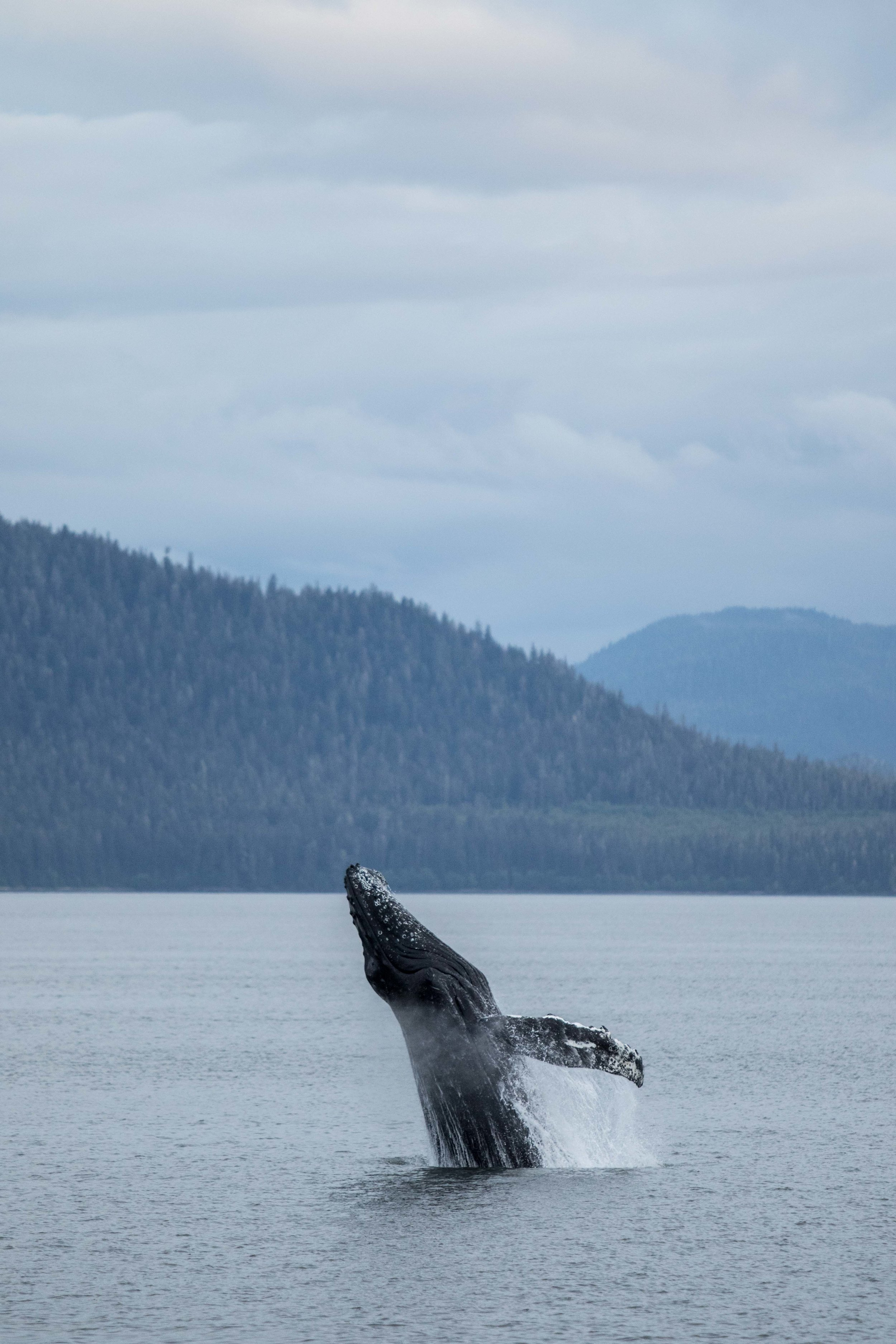 Wildlife-31.jpg