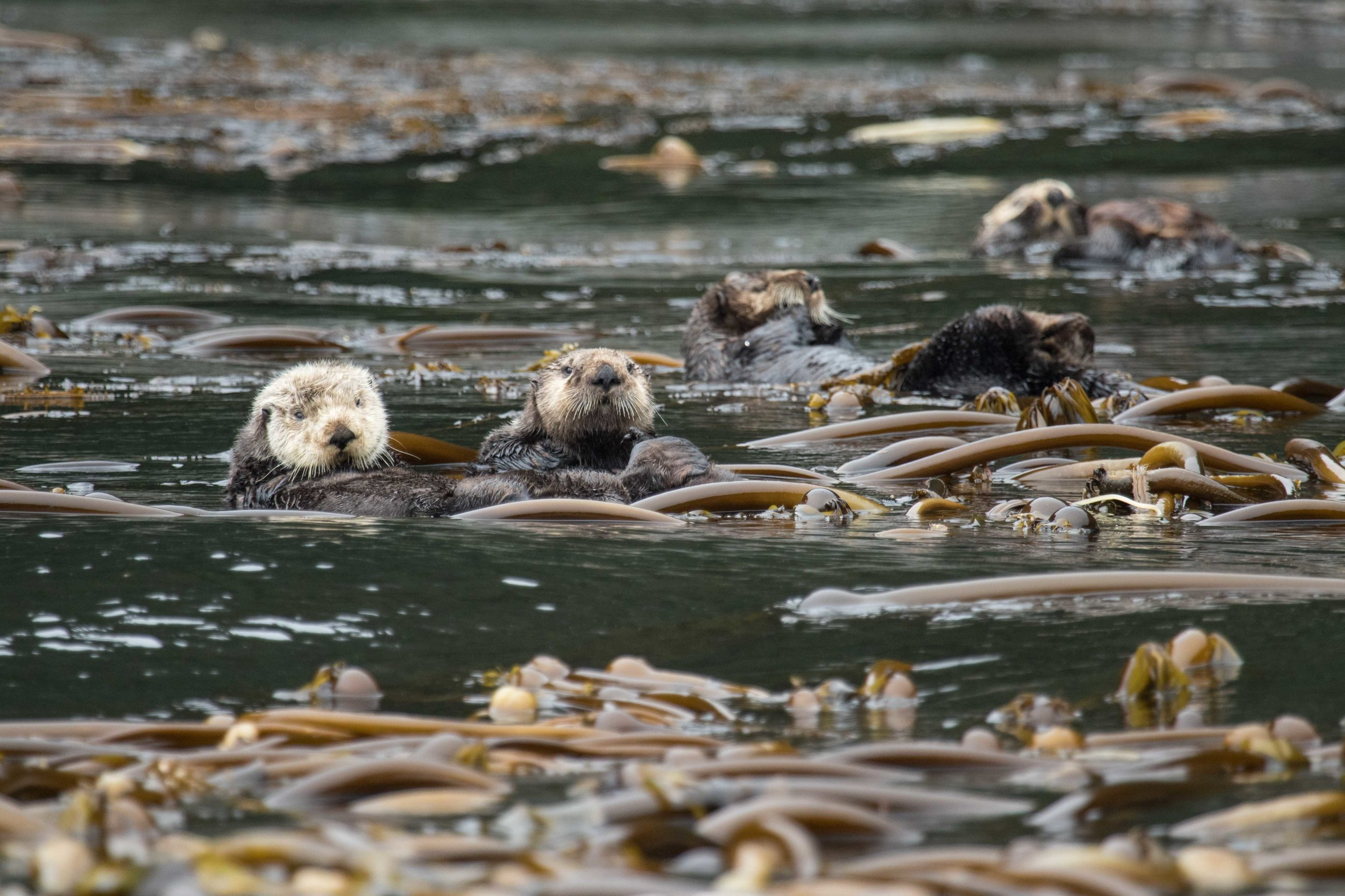 Otter haven