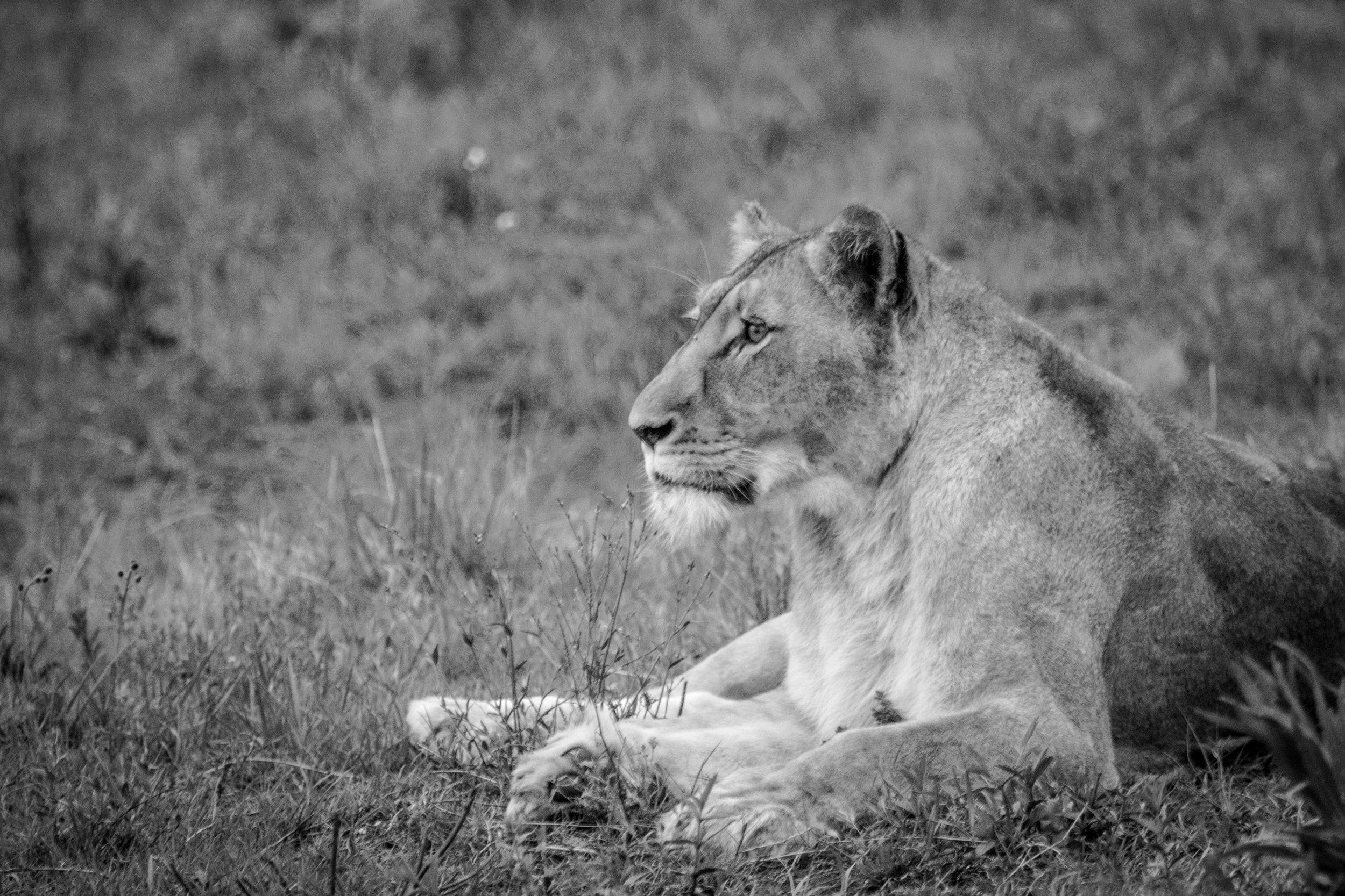 WildlifeAfr-3.jpg