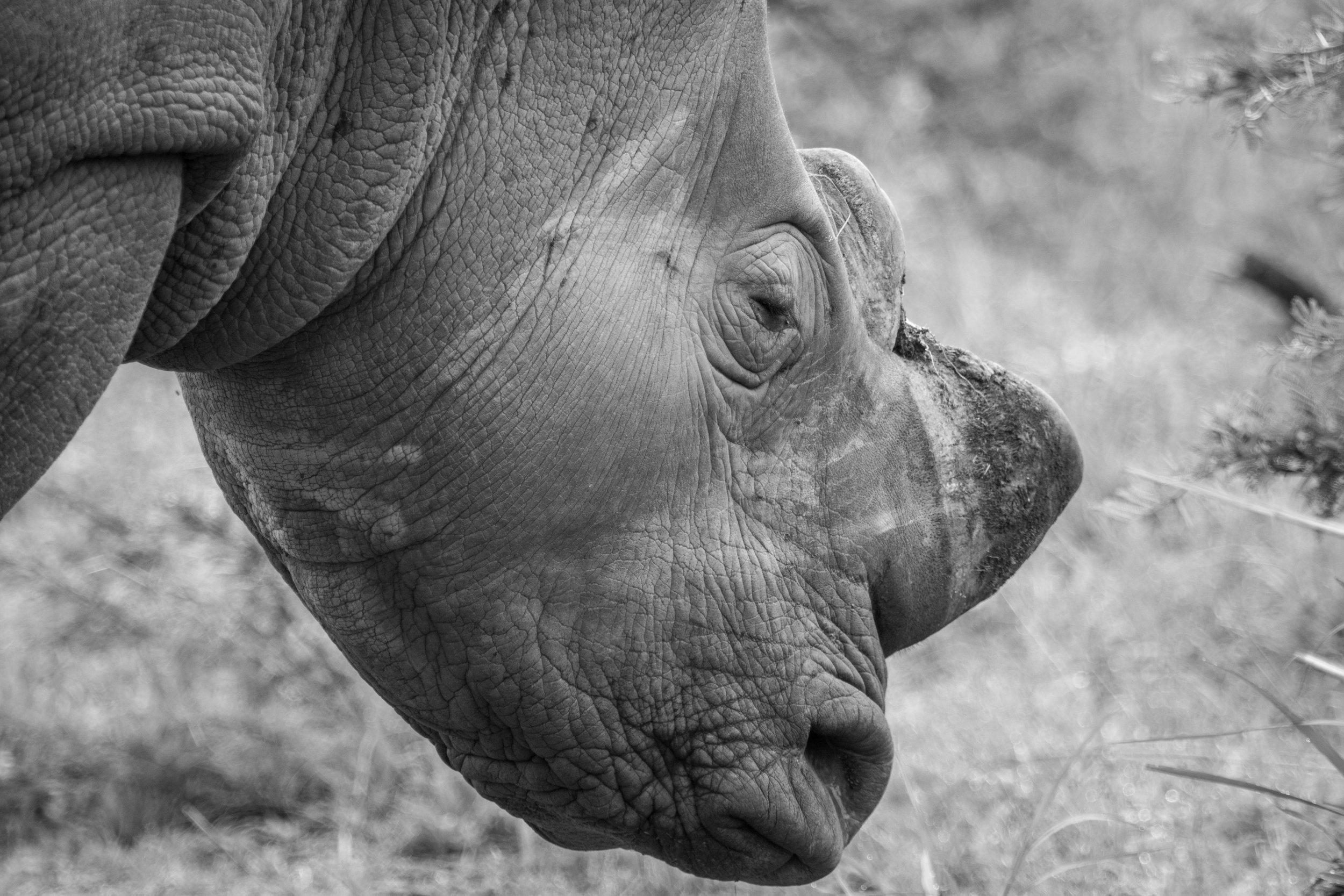 WildlifeAfr-7.jpg