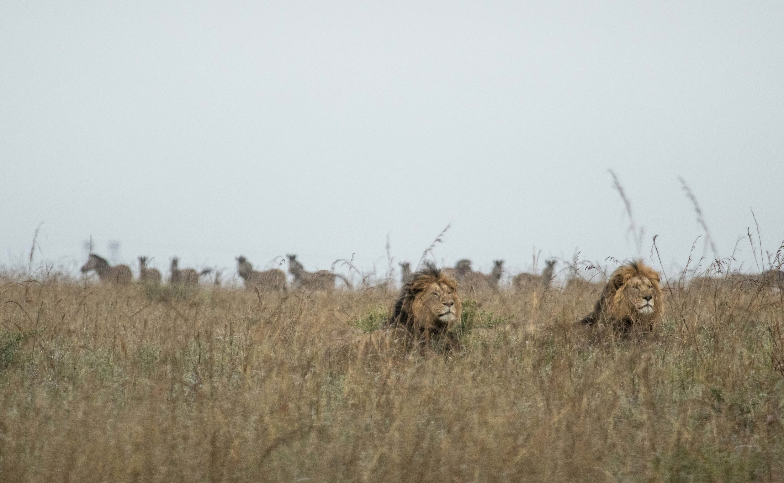 WildlifeAfr-10.jpg