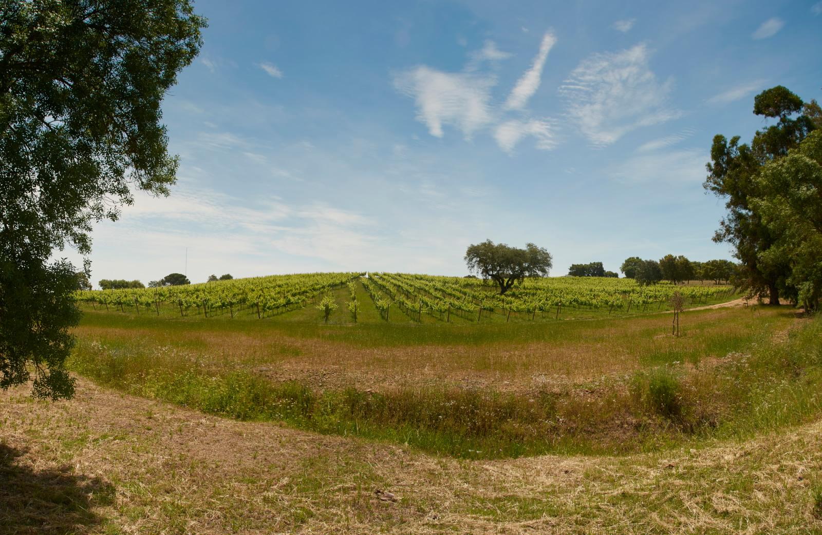 vineyard.pano.jpg