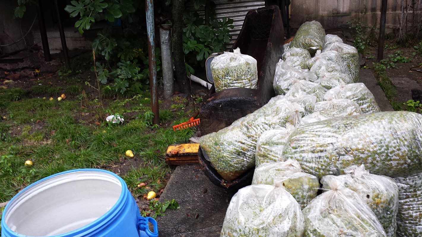 Many bags of grapes ready for stomping. Not pictured here is the night time drive to acquire them in the rain and mud that almost sent our van careening into brambles and ditches.
