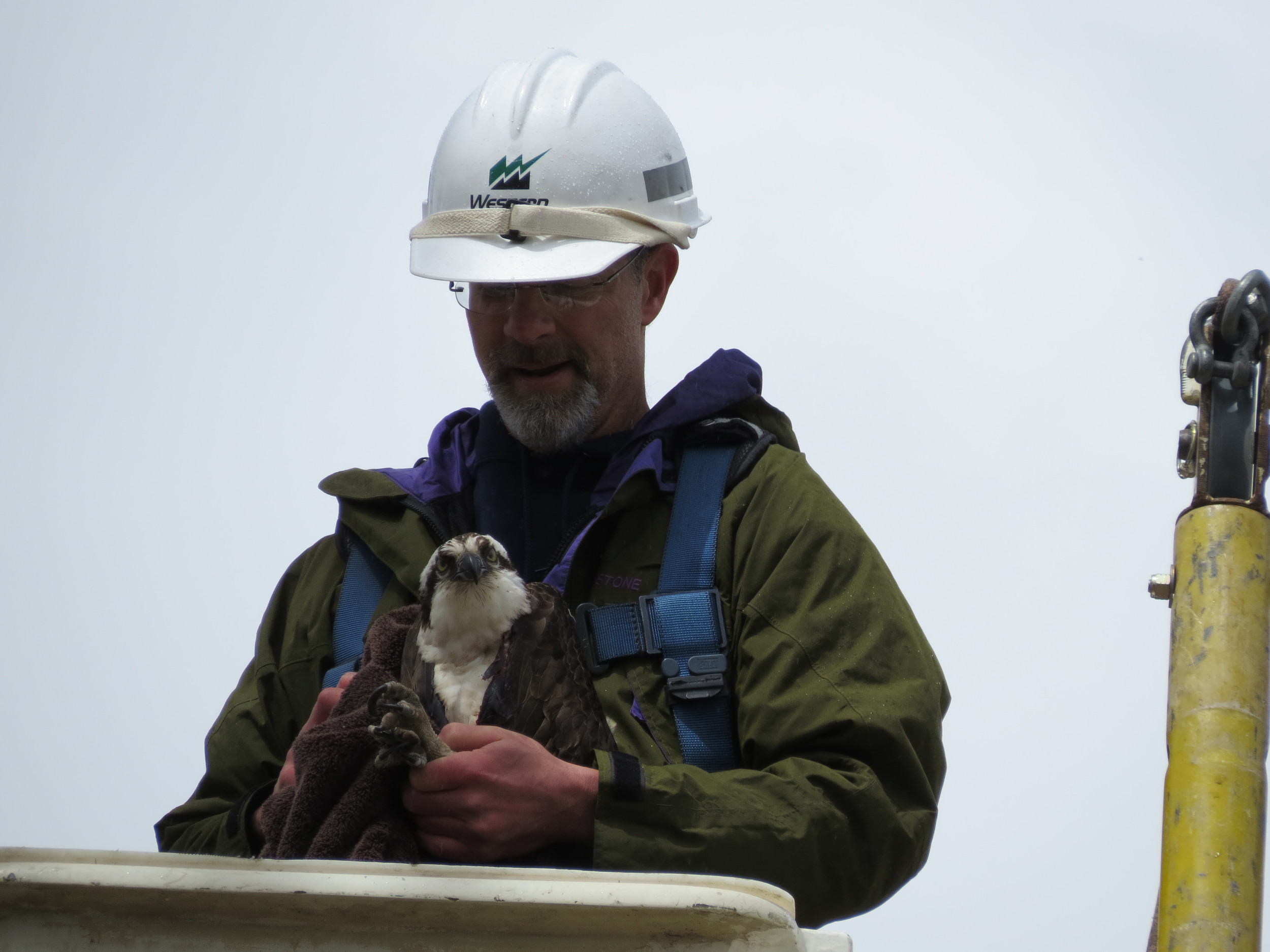Scott bringing the Osprey down to be taken to a vet for an examination.