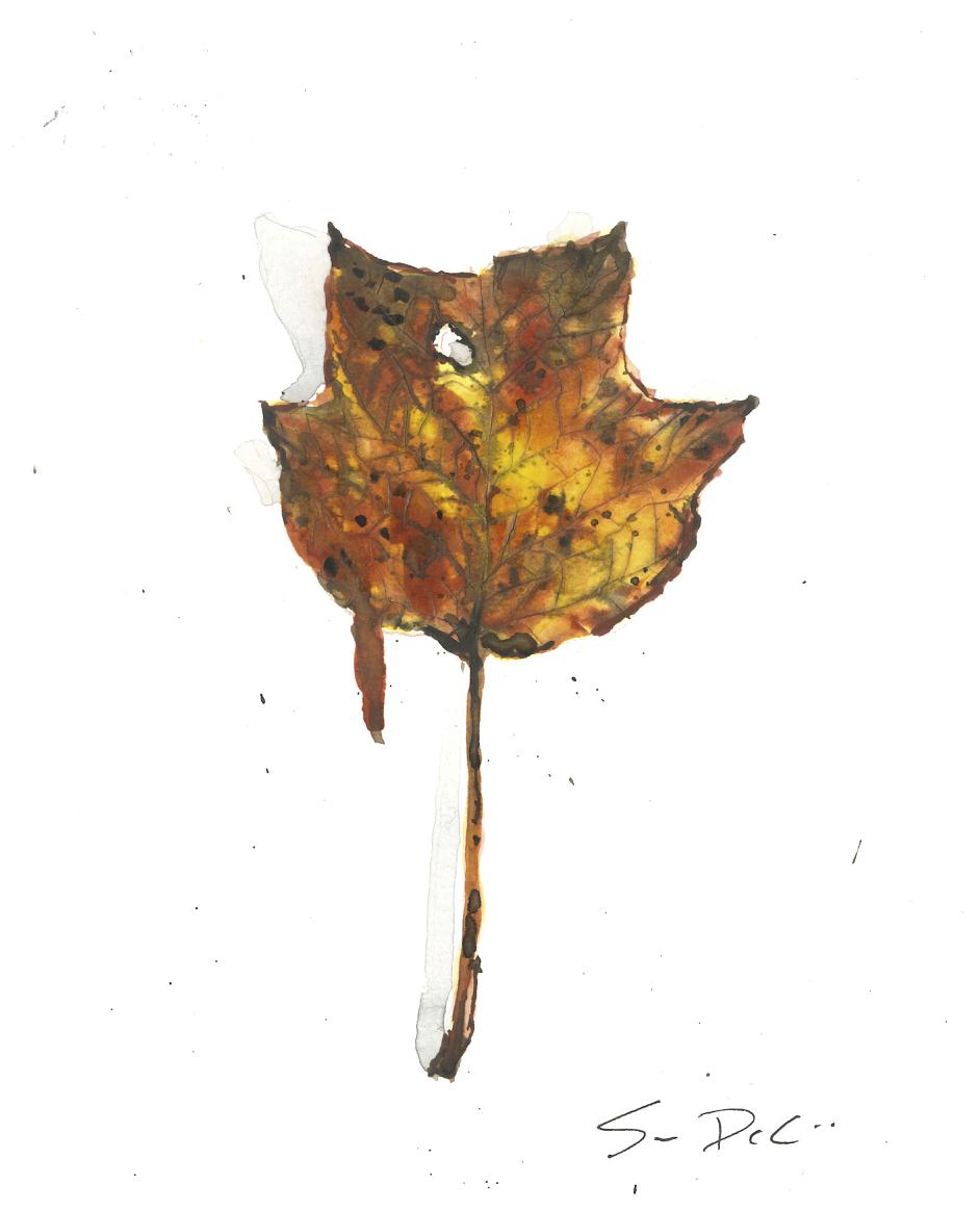 Tulip Poplar Leaf Portrait 046