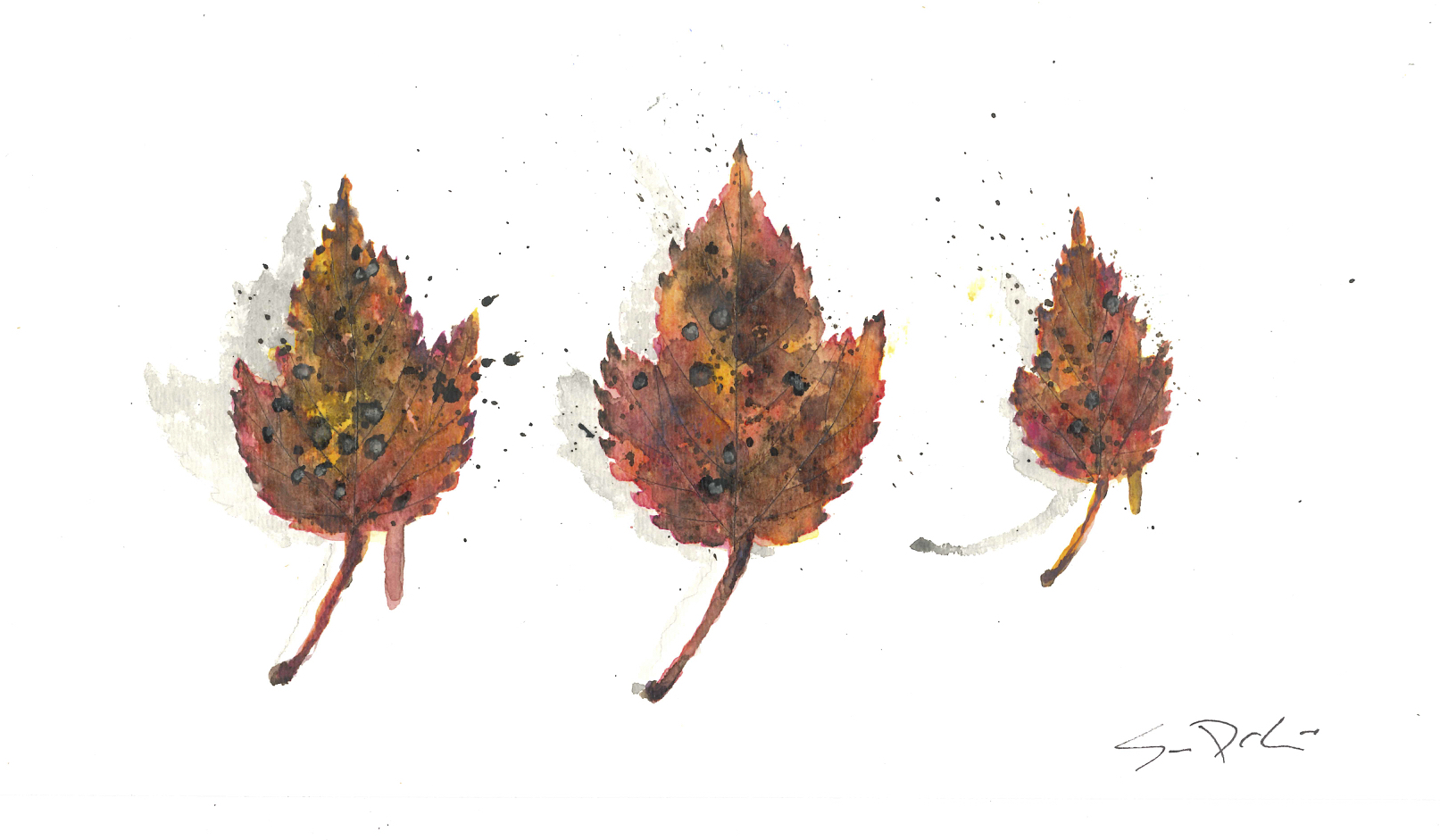 Red Maple Trio 058