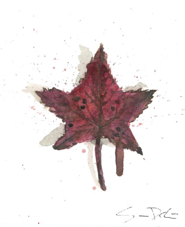 Sweet Gum Leaf Portrait 059