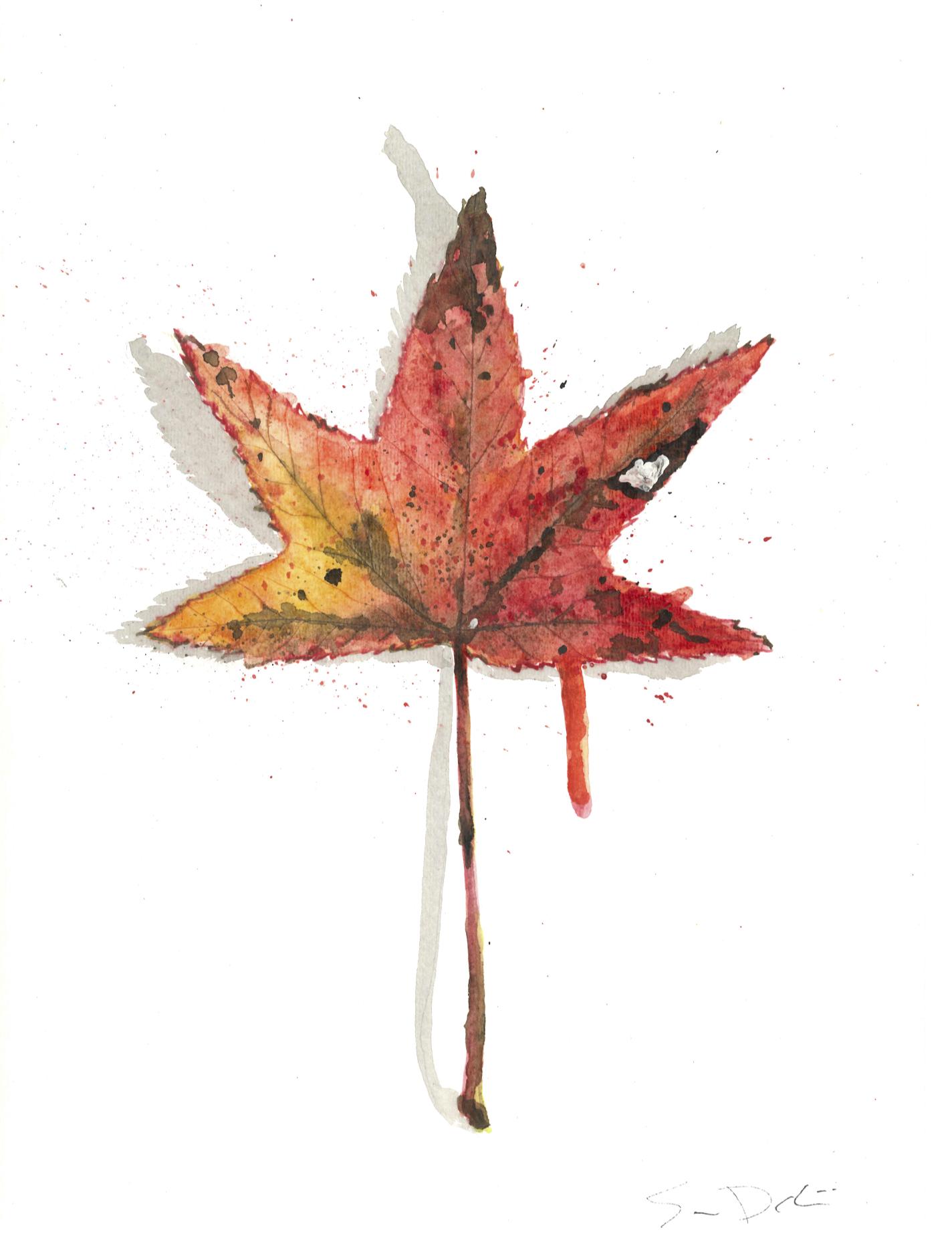 Sweet Gum Leaf Portrait 064