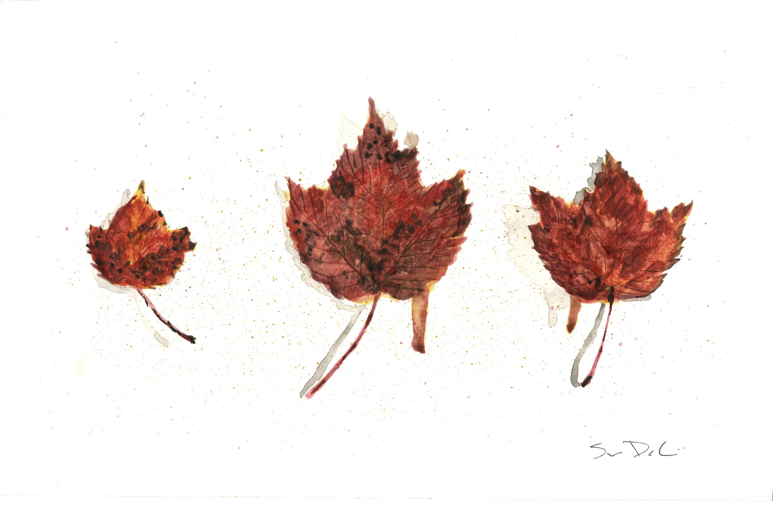 Red Maple Trio 010 - SOLD