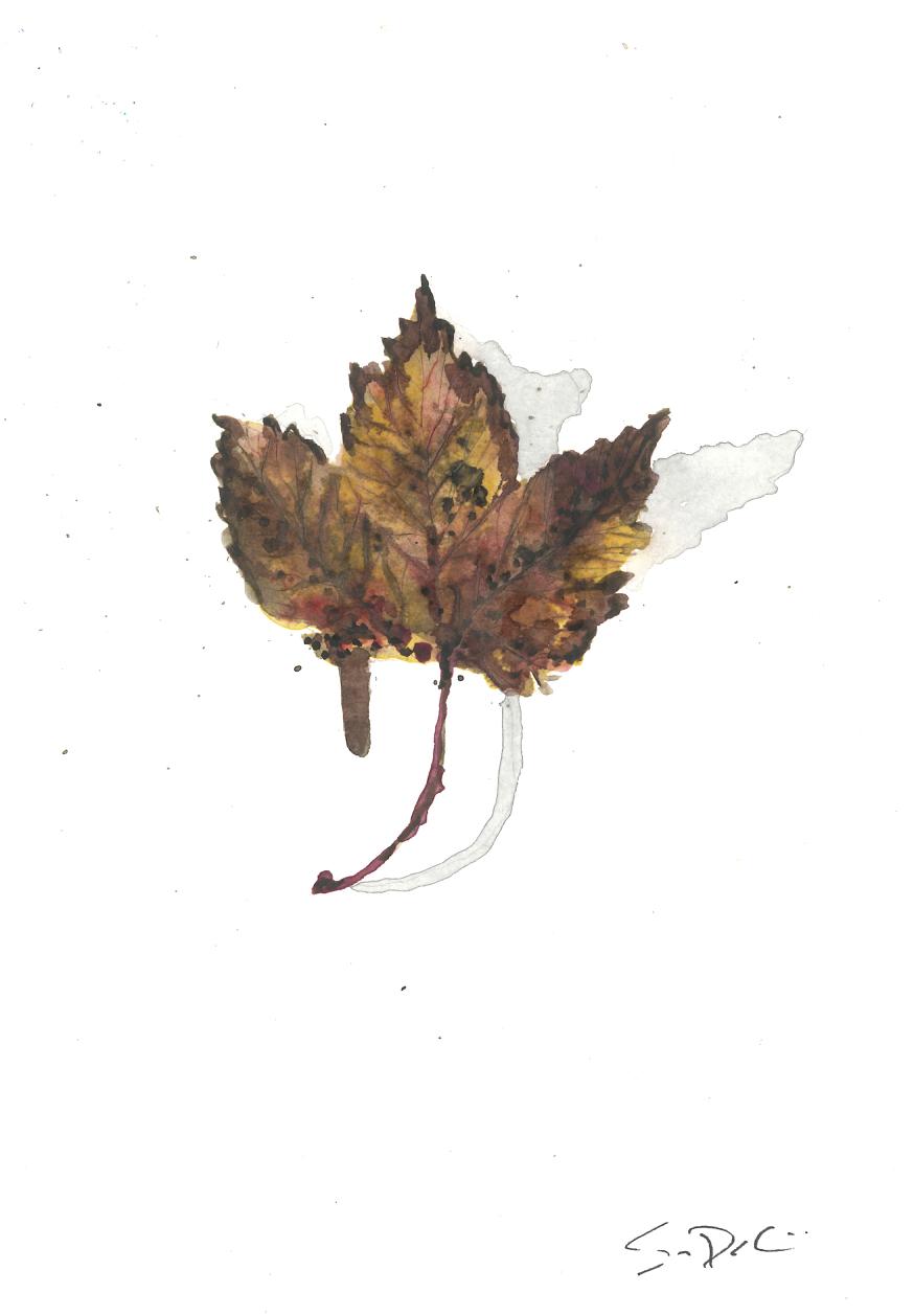 Leaf 44.jpg