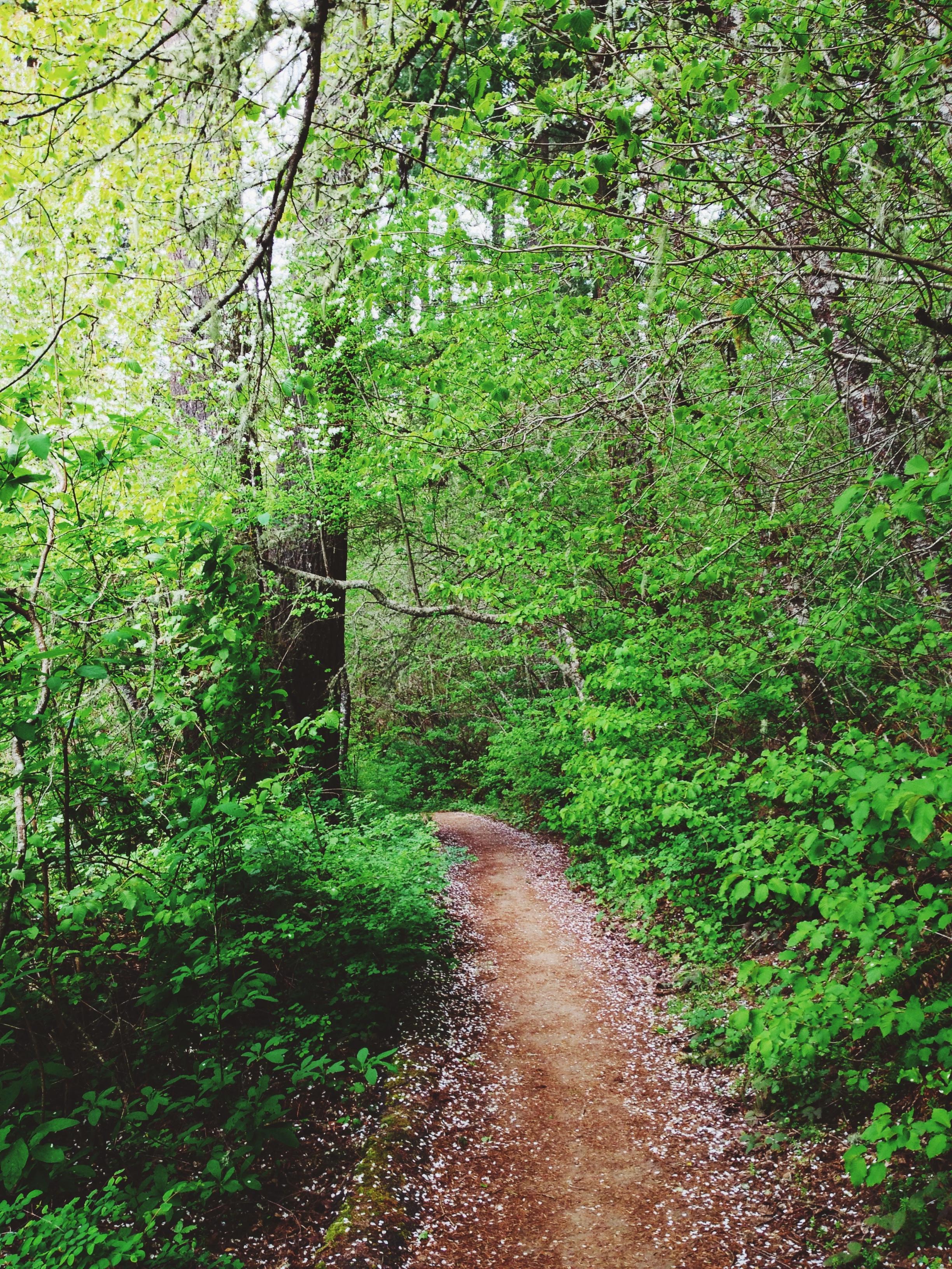 Nature Walk ~ Henry Hagg Lake Trail
