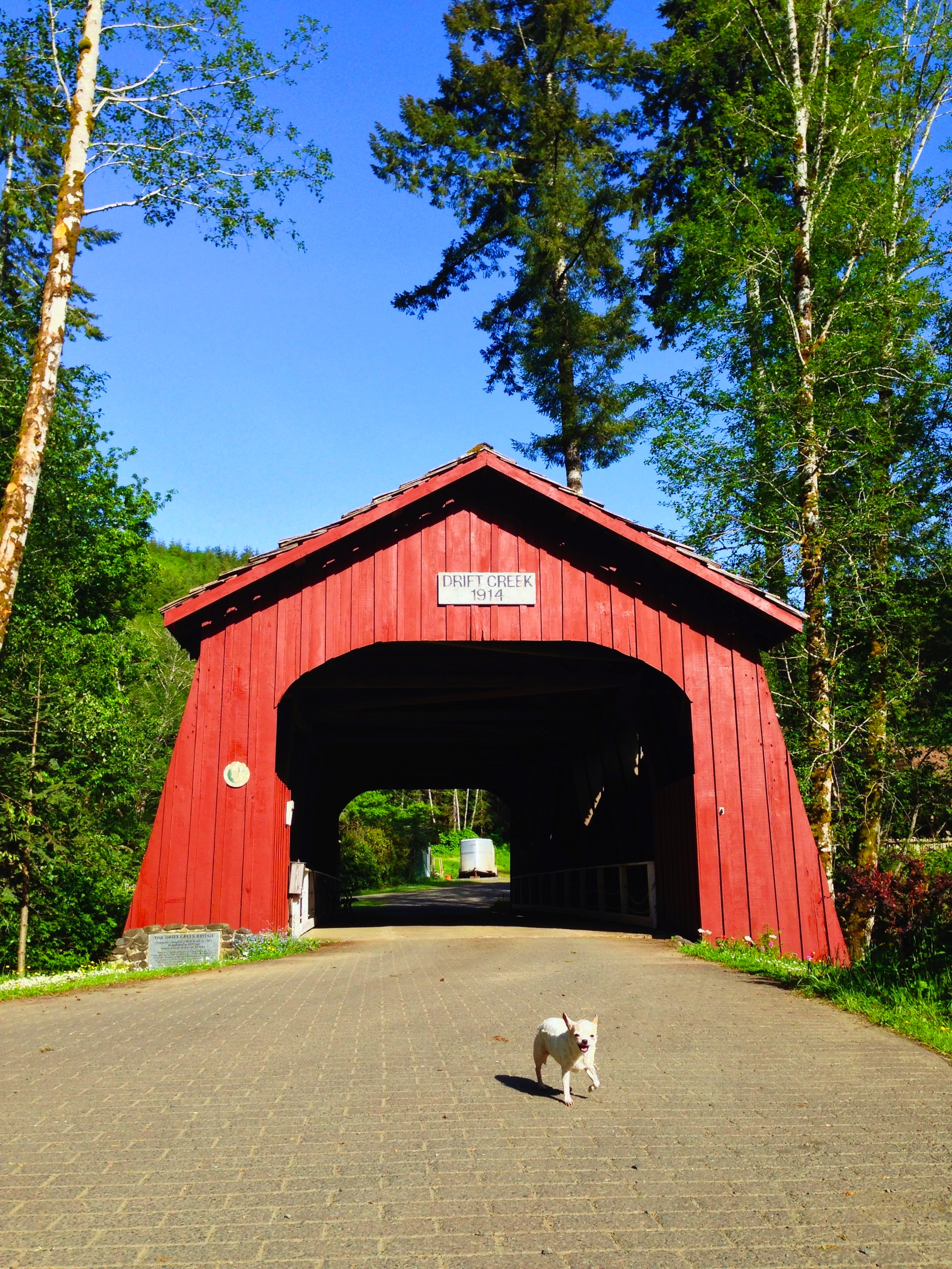 Drift Creek Covered Bridge, Lincoln County, OR