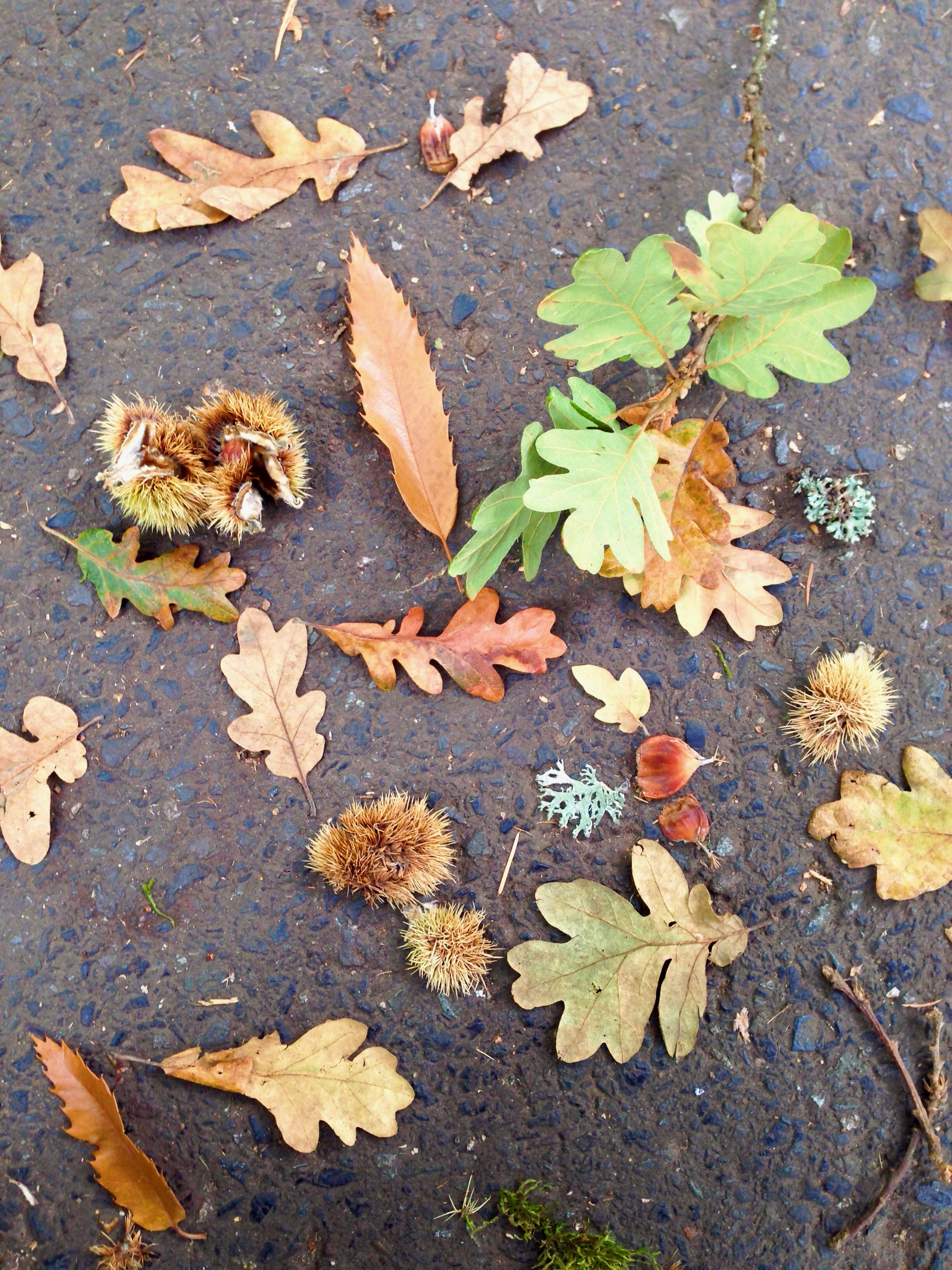 shapes + colors + texture of nature