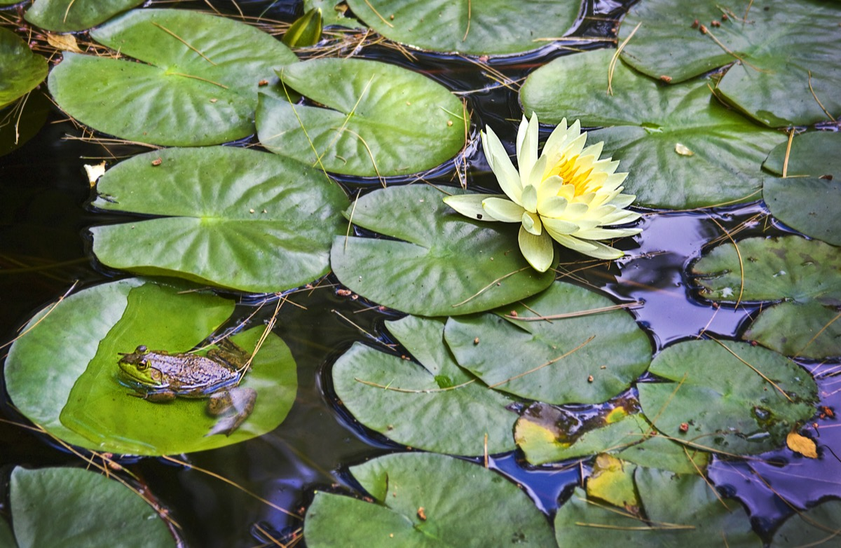 Minneapolis Pond Maintenance   Contact DIWhy Exteriors for a   Custom Pond Maintenance Quote