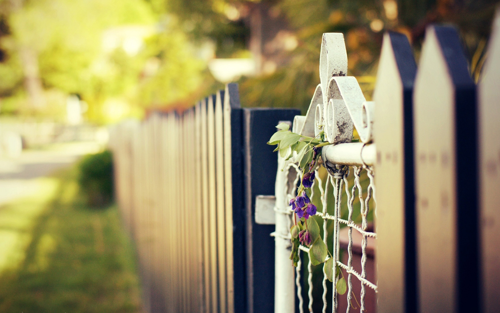 Minneapolis Fence Staining Company