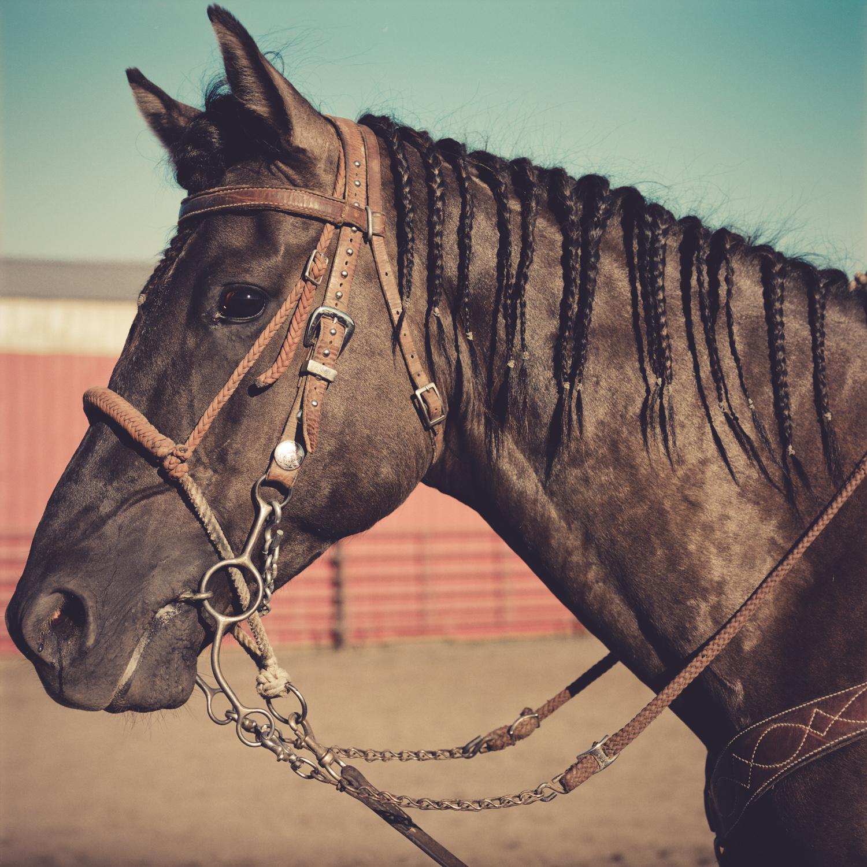 cowboy_photography-11.jpg