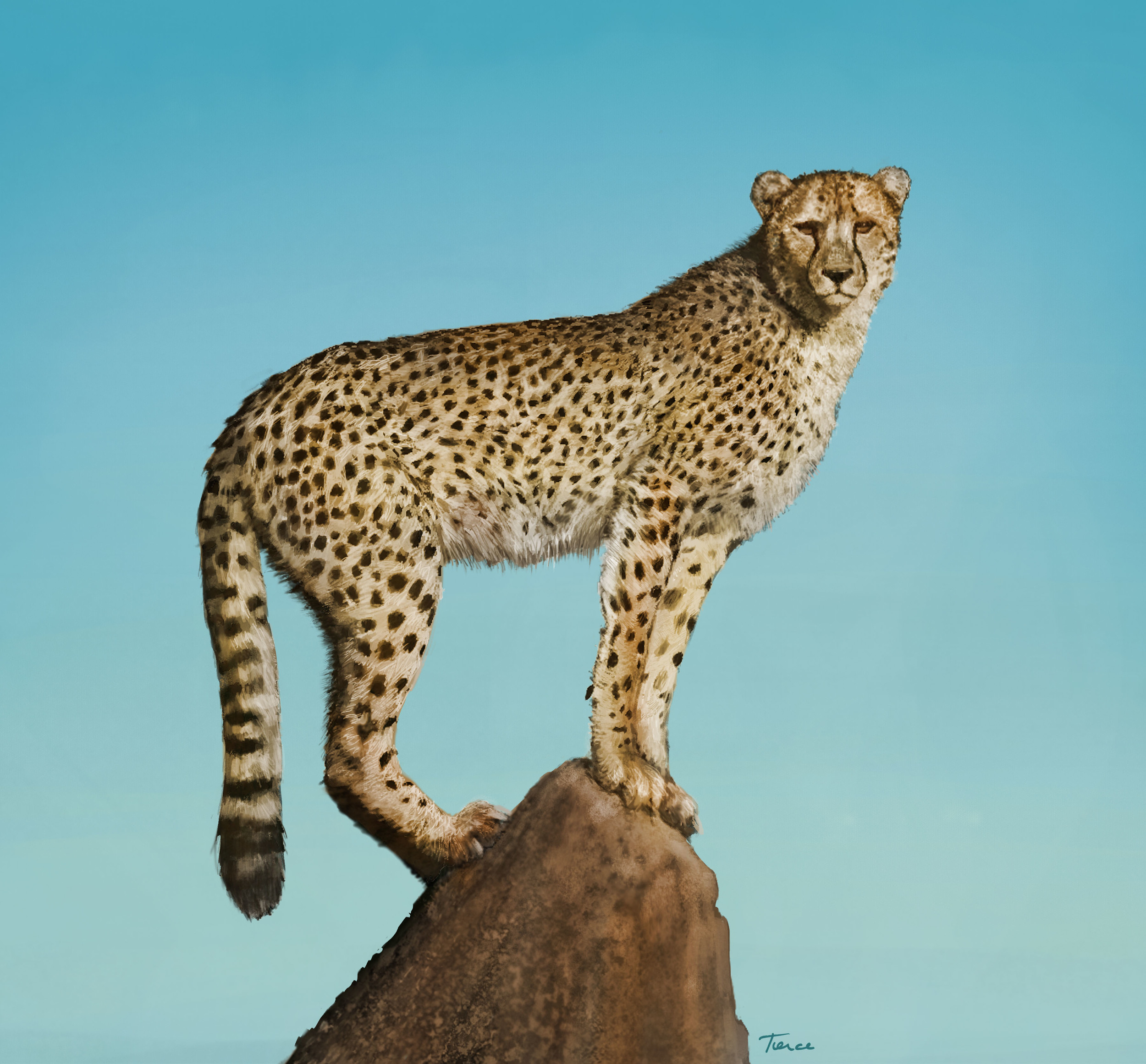 """A Cheetah for Maks"" by Nathalie Tierce"