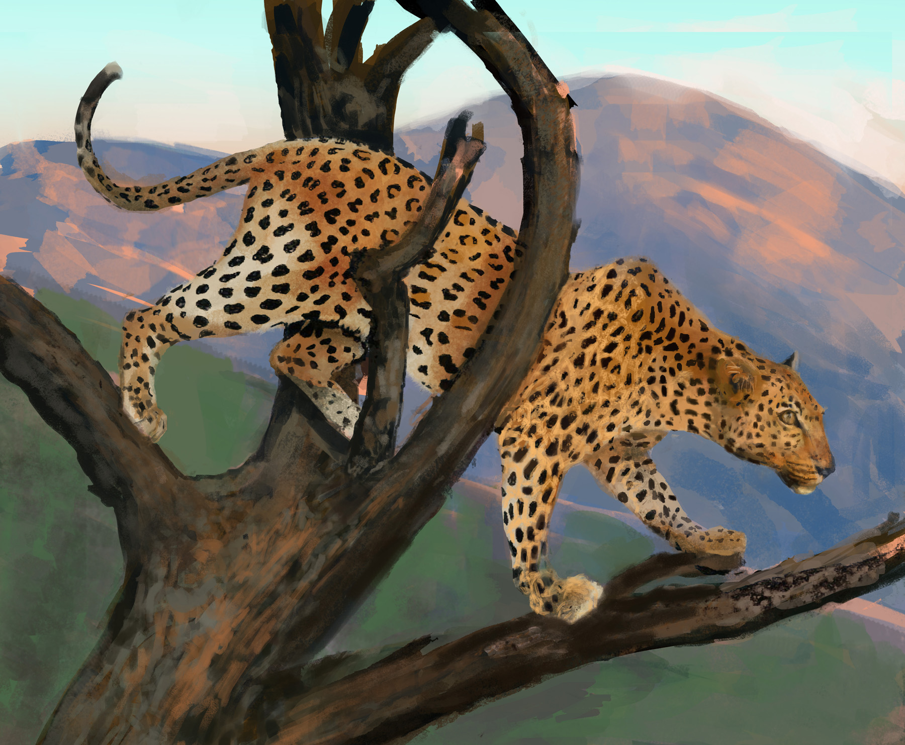 """Leopard"" sketch by Nathalie Tierce"