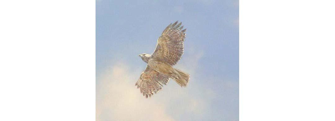 bird_huemme_ceiling_adj width.jpg