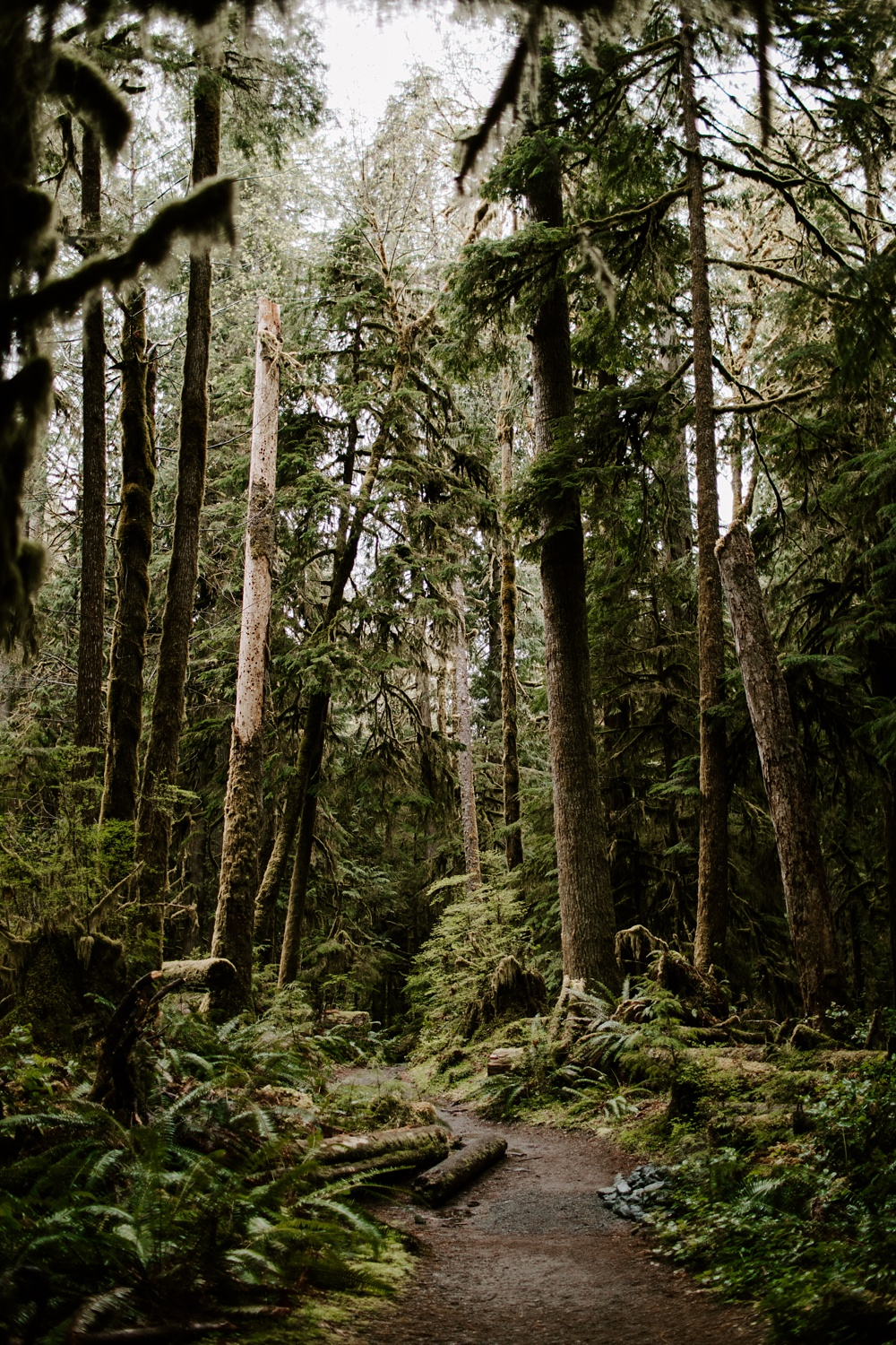 Olympic National Park Elopement Details