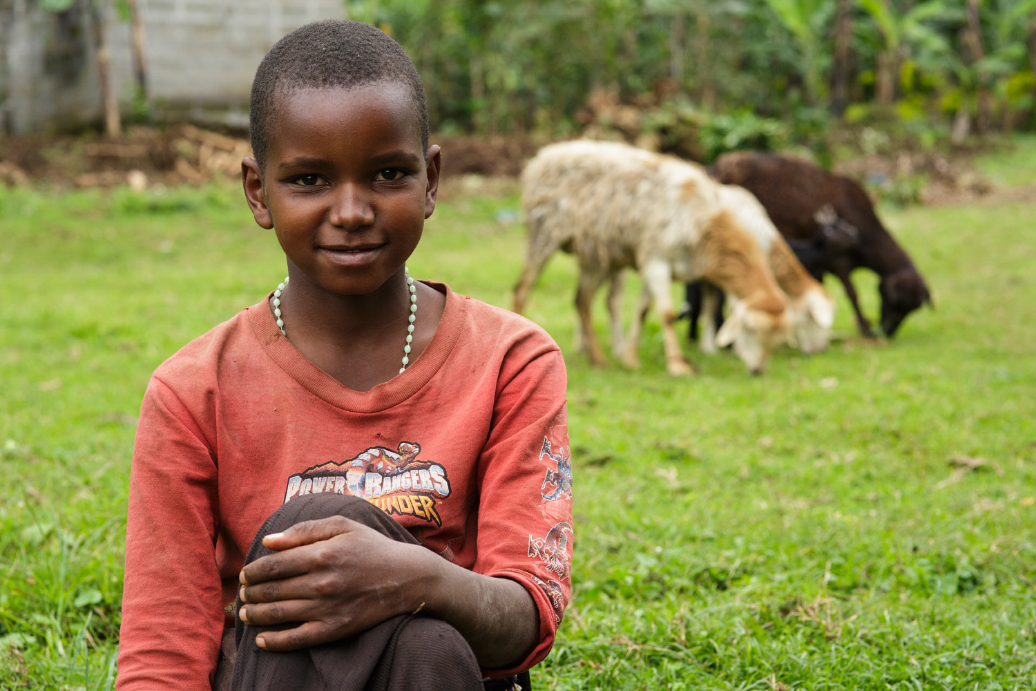 Village girl watching sheep in Kibosho-Umbwe