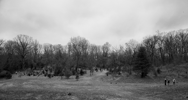 Tree farm
