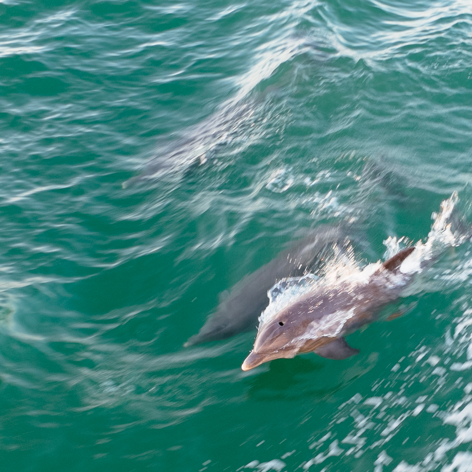Friends following our boat