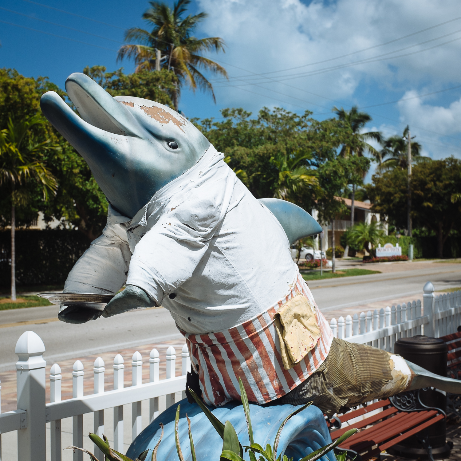Marco Island, where they dress their dolphins