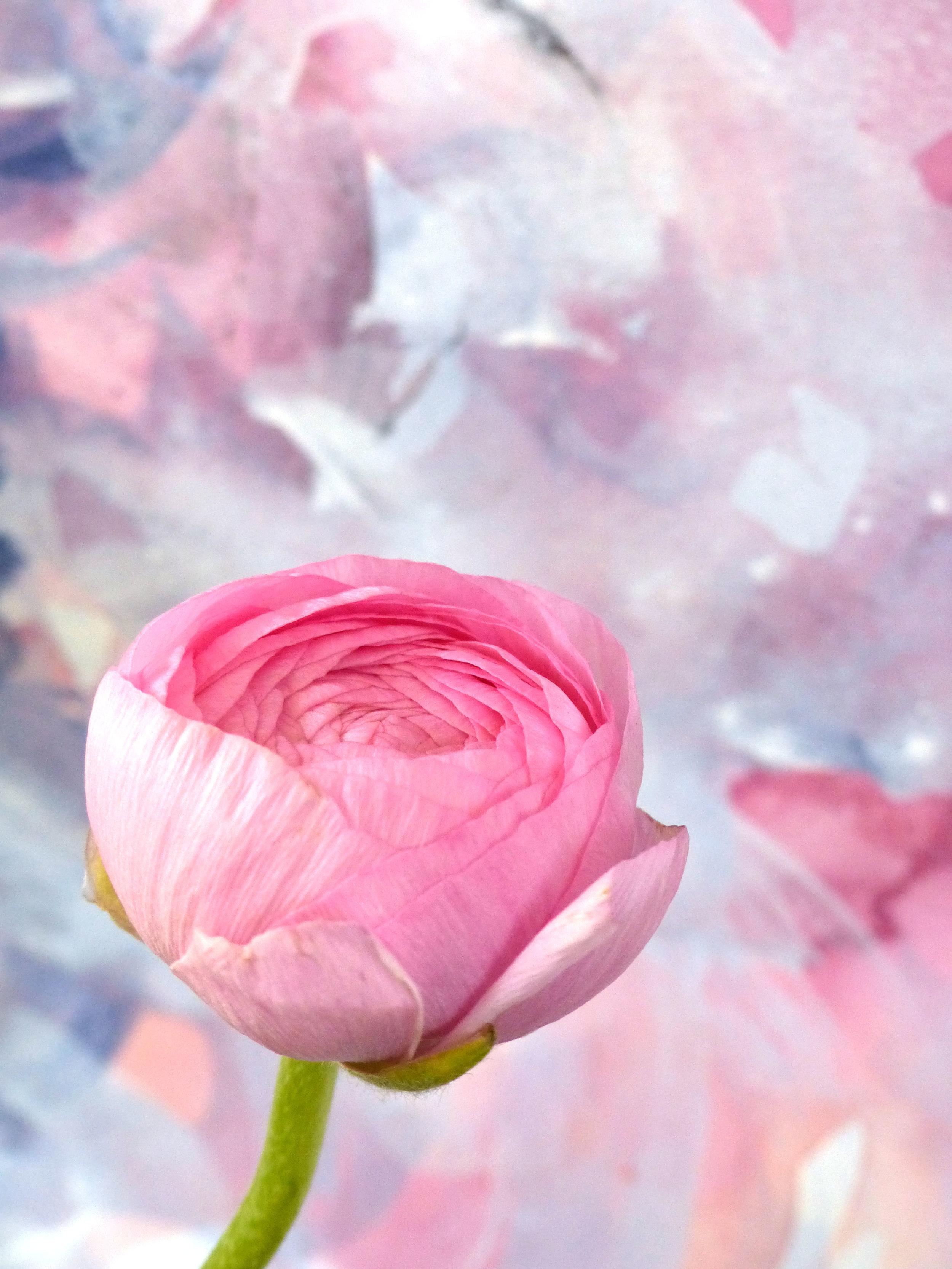 flower5_detail.jpg