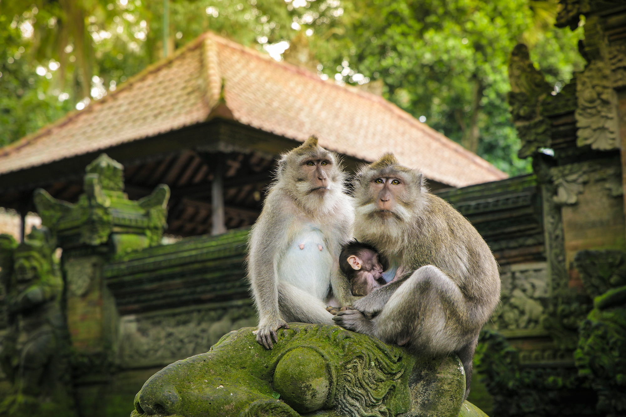 Sacred Family, Indonesia