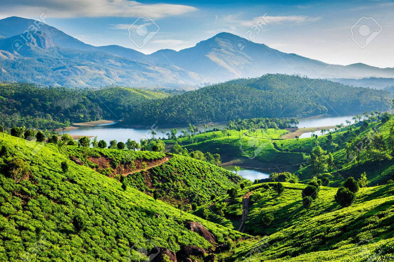 53414818-tea-plantations-and-muthirappuzhayar-river-in-hills-near-munnar-kerala-india.jpg