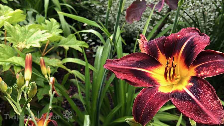 landscaper_ballarat_new-garden_alfredton_08.jpg