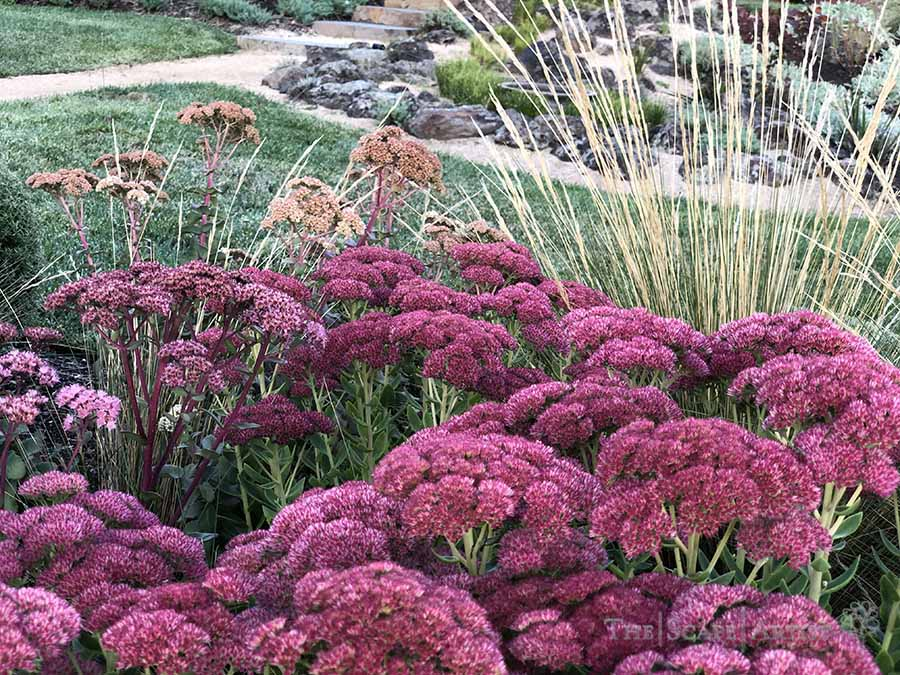 landscaping-garden-design-ballarat-moola_26.jpg