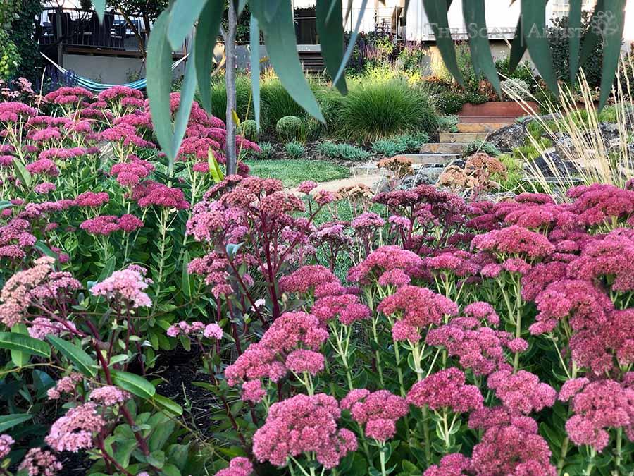landscaping-garden-design-ballarat-moola_117.jpg