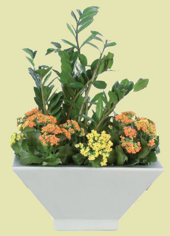 ZZ and Kalanchoe Arrangement