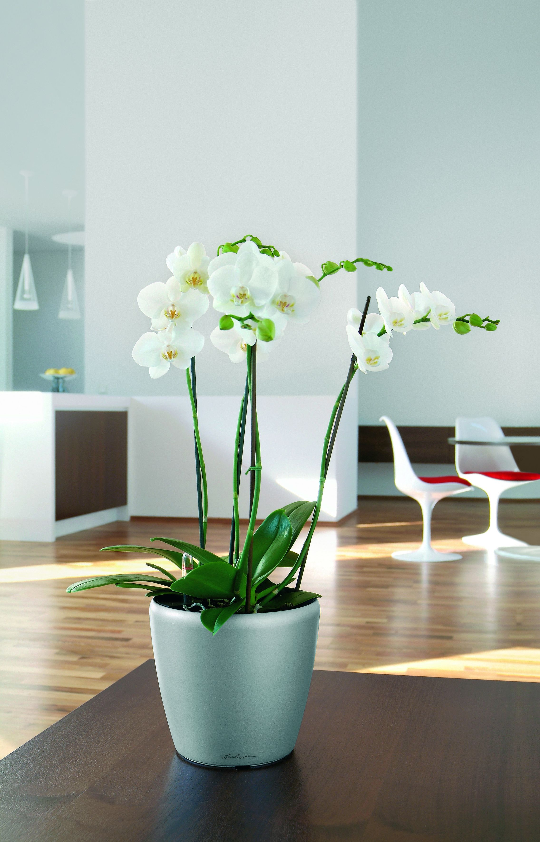 Classico 21 Silver tabletop with Orchids.jpg