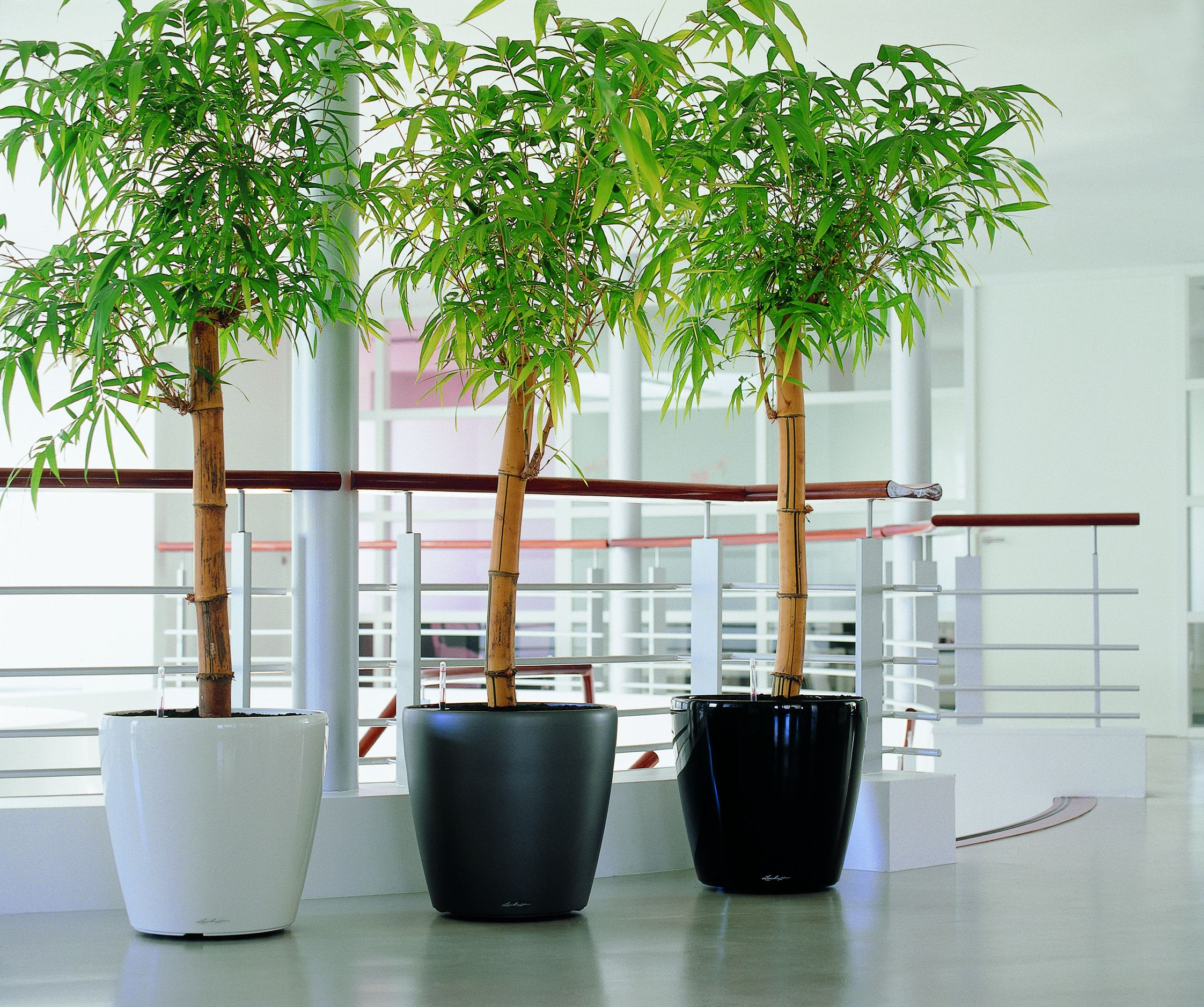 Classico White, Silver, Charcaol with Bamboo.jpg