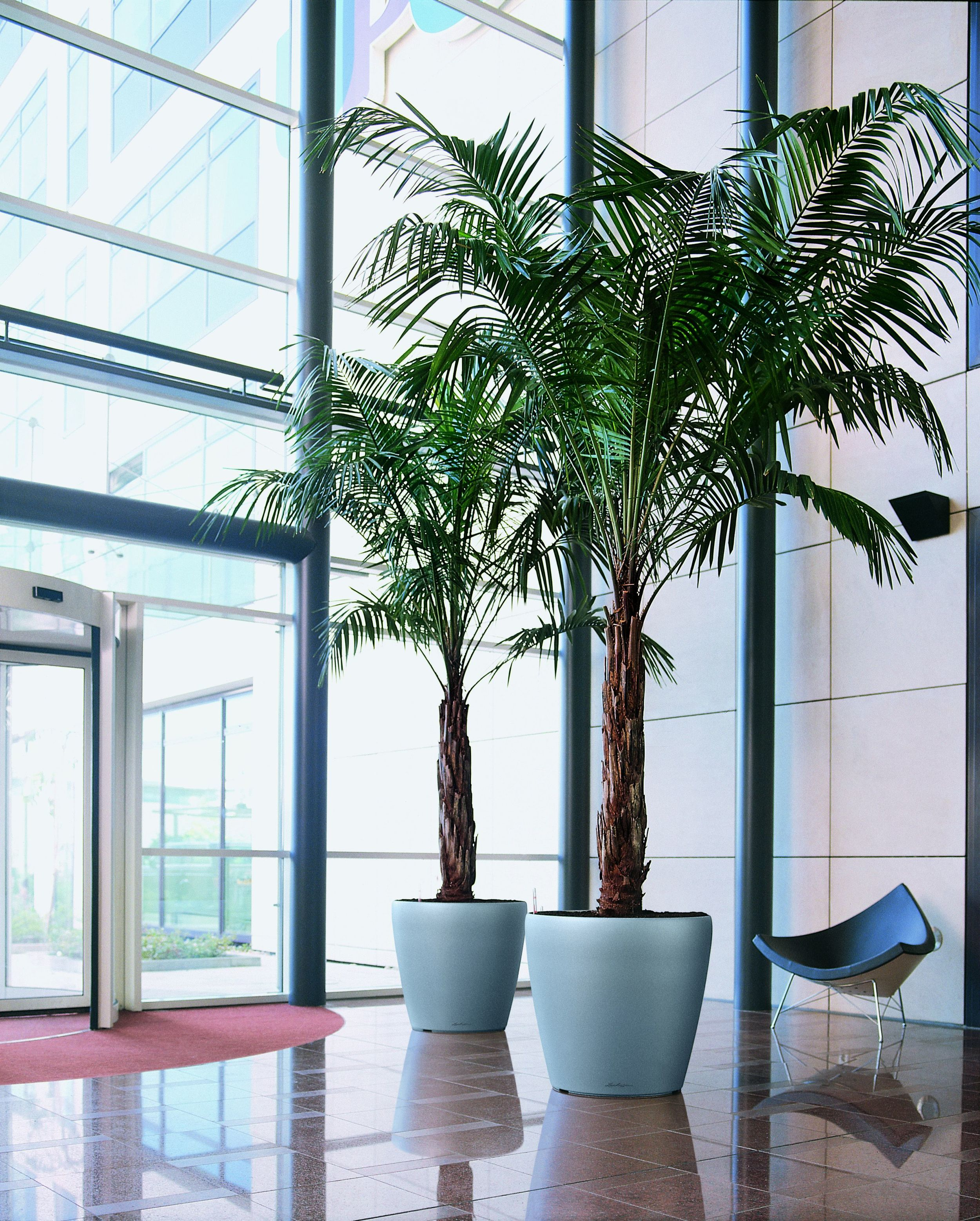 Classico Silver in atrium with palm trees .jpg