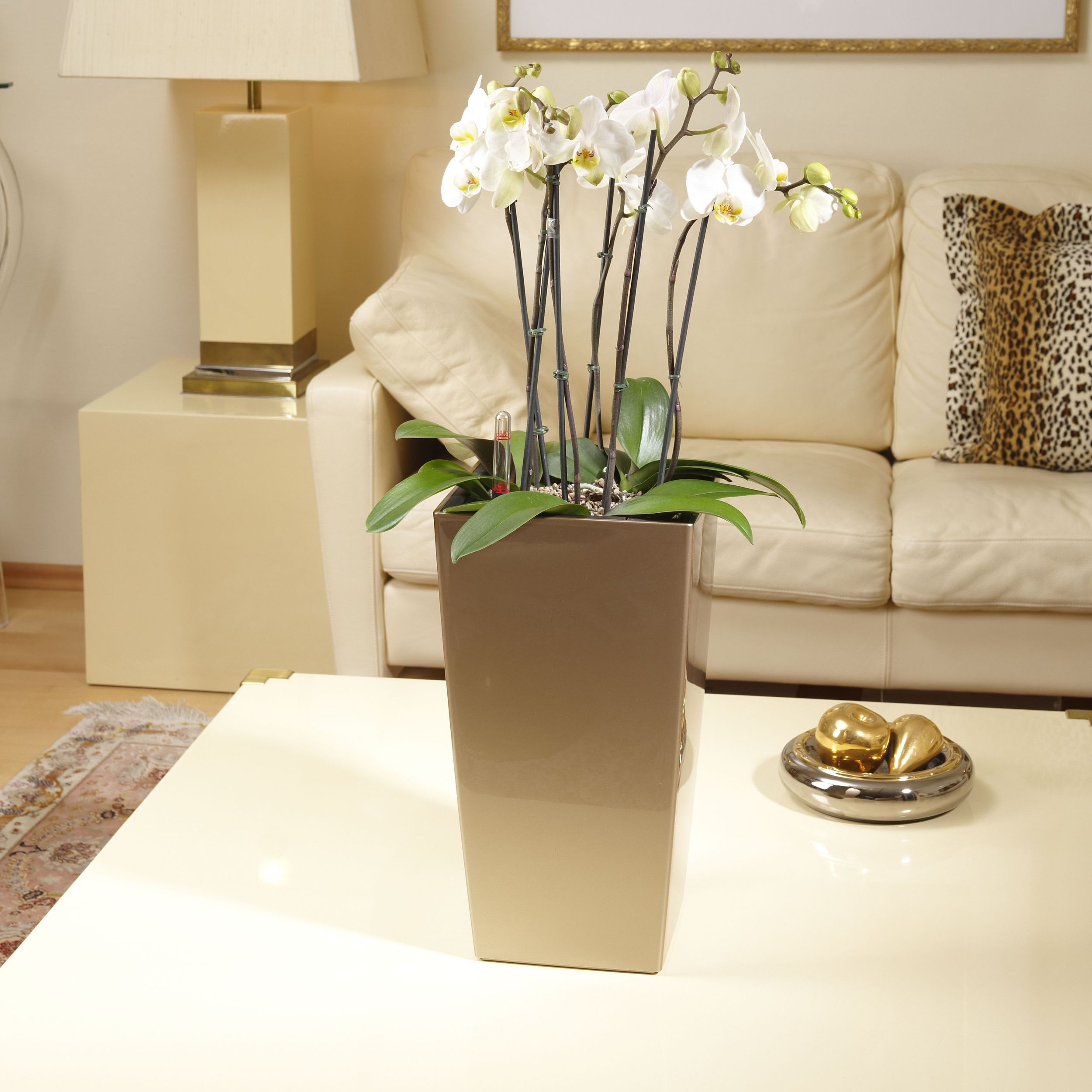 Cubico 22 Pearl Beige with orchids in living room.jpg